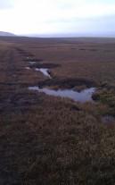 Peat land restoration: Grip blocking